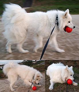 ball_1611013.jpg