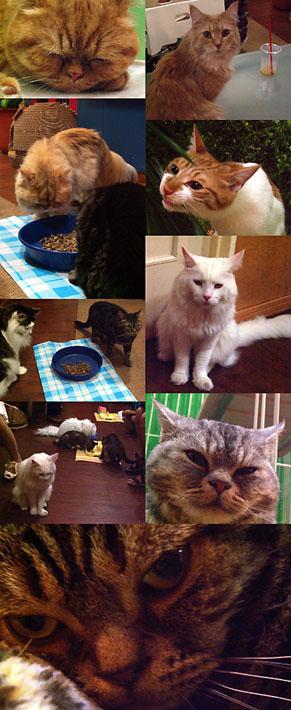 cat010006202.jpg