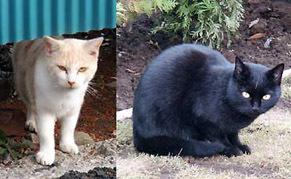 cat121105.jpg