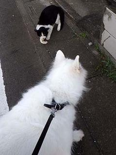 cat1808311.jpg