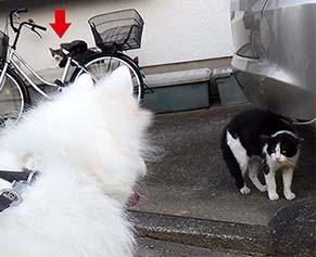 cat1808312.jpg