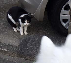 cat1808313.jpg