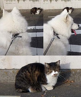 cat181220.jpg