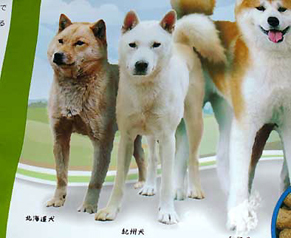 dog_f1405022.jpg