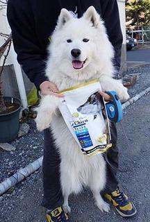 dog_f1802152.jpg