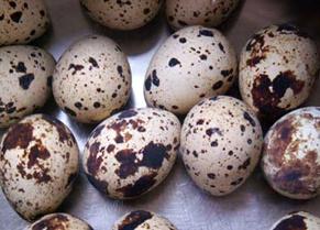egg1405271.jpg