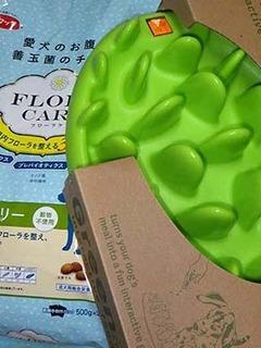 flora2011021.jpg