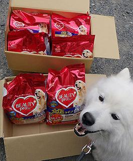 iyo_food1705173.jpg