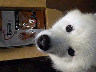 iyofood201212.jpg