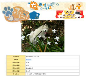 iyopuni140613.jpg