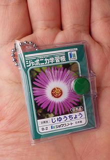 japonica170518.jpg