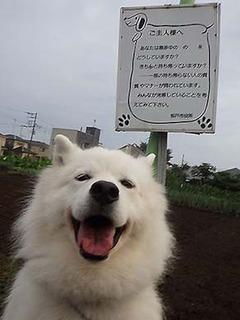 kinjo1907193.jpg