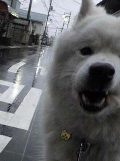 kinjo2101242.jpg
