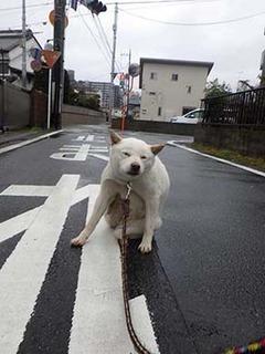 kinjo_g2103132.jpg