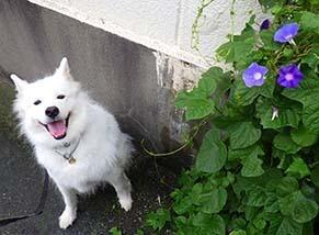 kinjo_i1809152.jpg