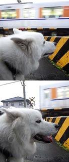 kinjo_i1810121.jpg