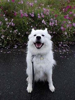 kinjo_i1810122.jpg