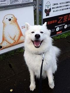 kinjo_i1810192.jpg