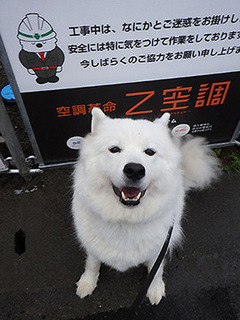 kinjo_i1811092.jpg