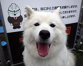 kinjo_i1811093.jpg
