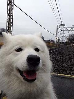 kinjo_i1902281.jpg