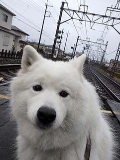 kinjo_i1903041.jpg