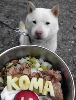 koma1704021.jpg