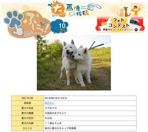 komaiyo_p140704.jpg