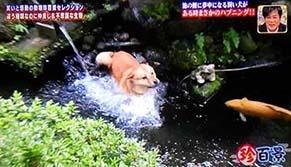 kotetsu2005182.jpg