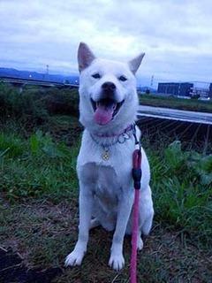 kubiwa2010113.jpg