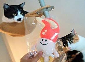 m_cat1809131.jpg
