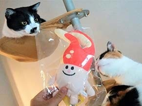 m_cat1809132.jpg