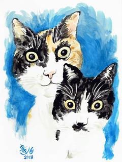 mucchi_cat190430.jpg