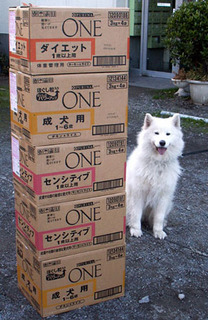 nike_one1012181.jpg