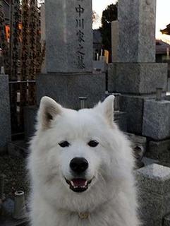ohaka1801012.jpg