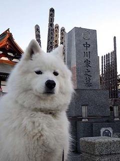 ohaka1801013.jpg