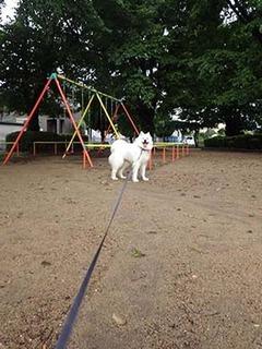 park_i1807294.jpg