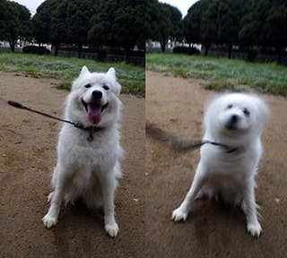 park_i1809263.jpg