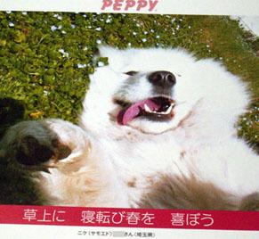 peppy_n110906.jpg