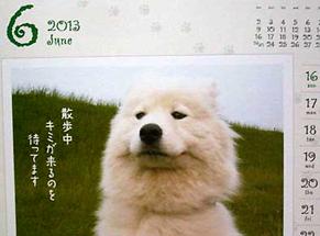 senryu_nike120923.jpg
