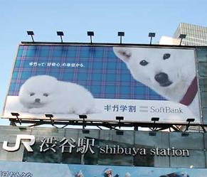 shibuya160429.jpg