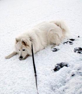 snow__i1602071.jpg