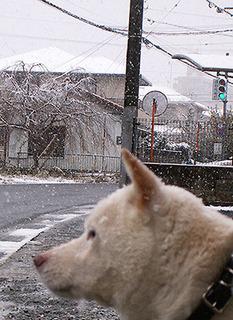 snow__k161124.jpg