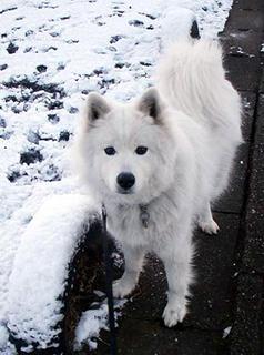 snow_i1602072.jpg