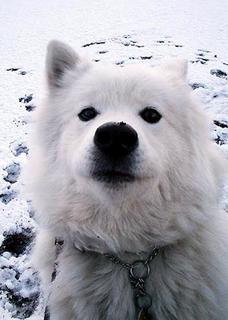 snow_i1602073.jpg