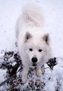 snow_i1602251.jpg
