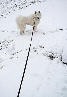 snow_iyo1611241.jpg
