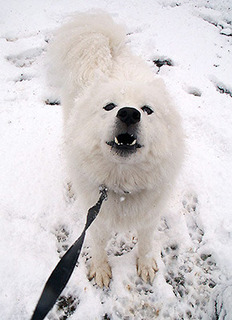 snow_iyo1611242.jpg