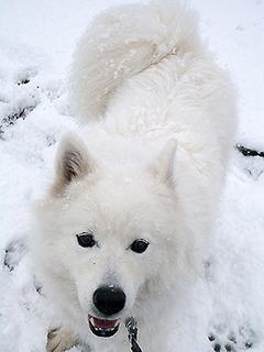 snow_iyo1611243.jpg