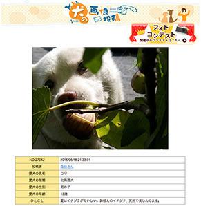 summer_wan161024.jpg